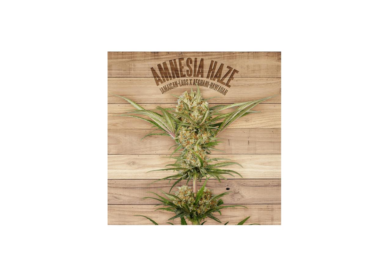 Marihuana amnesia