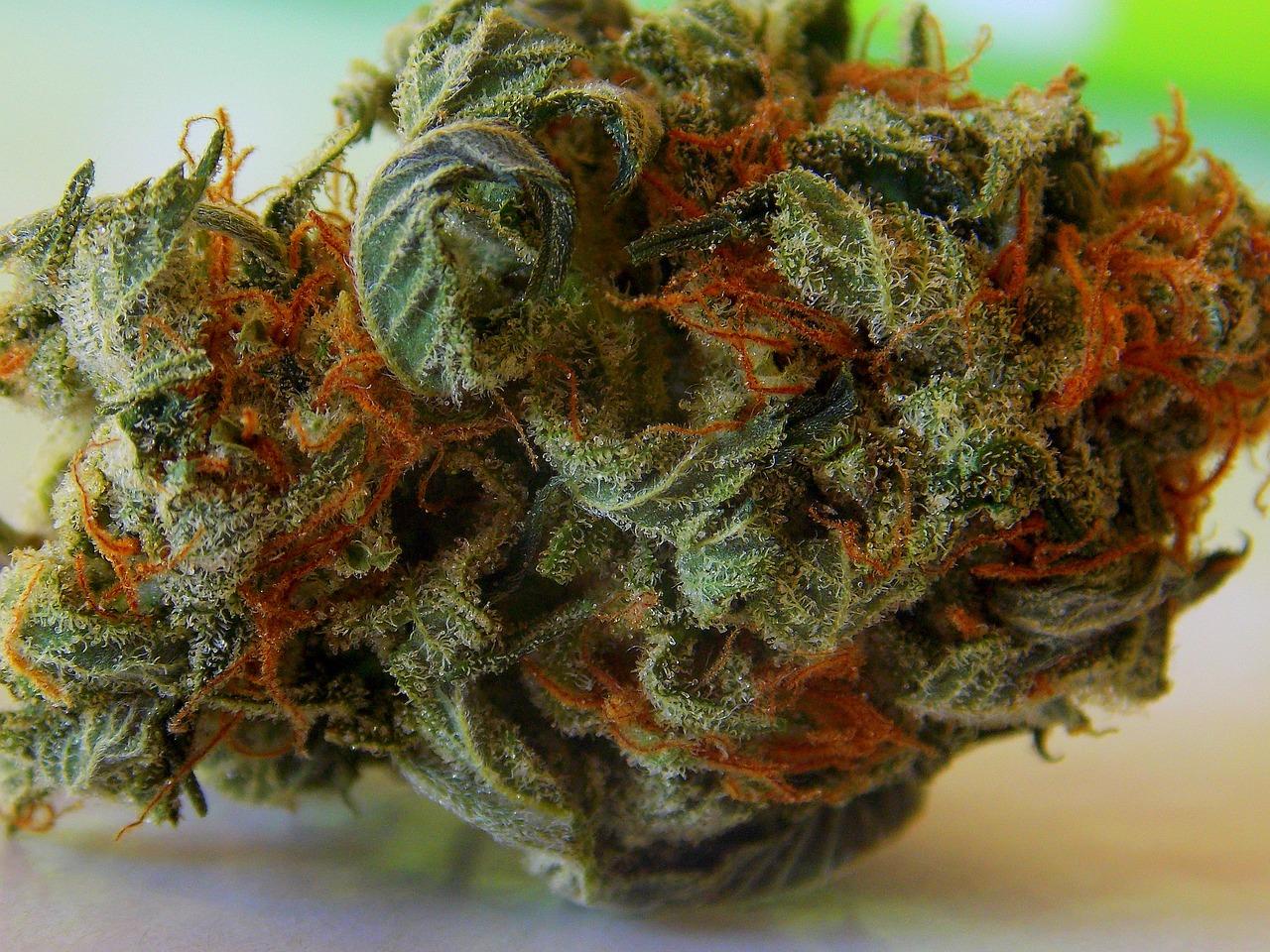 Comment obtenir plus de fleurs et de meilleurs bourgeons dans vos plants de marijuana